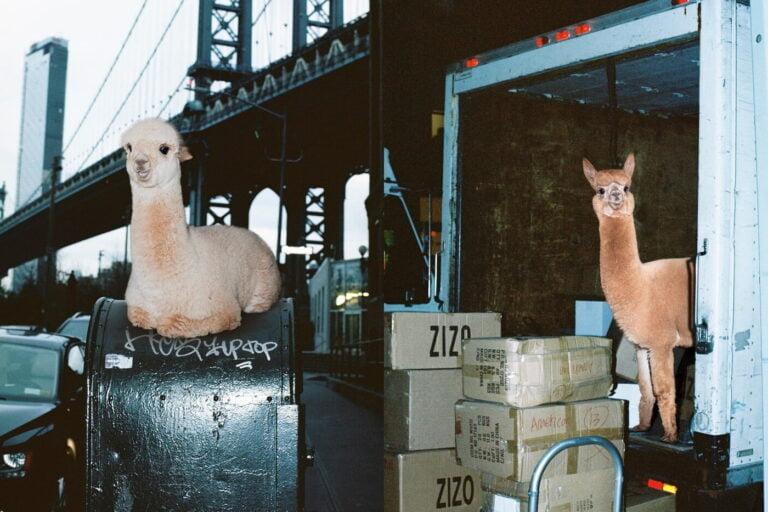ALPACA NEW YORK CITY mashKULTURE