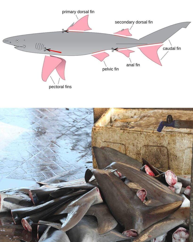 OG Slick Shark Plush 6 OG SLICK: B*szd meg a cápauszonylevesed